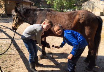Médiation cheval durant les vacances de Toussaint